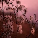 Paysages-Nature