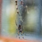 periple web (63)